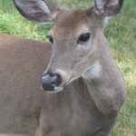 Bambi Not Welcome – Installing Deer Fencing to Protect Your Landscaping