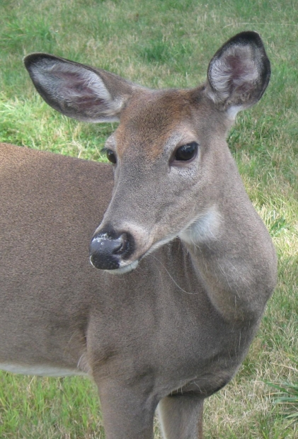 Bambi Not Welcome Installing Deer Fencing To Protect