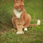 Deterring Your Neighbours Cats From Using Your Garden as a Toilet