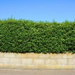 The Million Dollar Question: When Should You Trim Your Hedge?