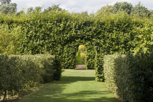 hedges2