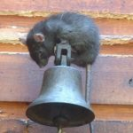 The Best Ultrasonic Pest Repellers