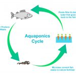 Aquaponics in the UK: an Introduction For Beginners