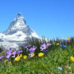 Growing Alpine Plants in Your Garden