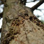 Repairing a Damaged Tree