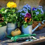 5 Top Gardening Tips For Beginners